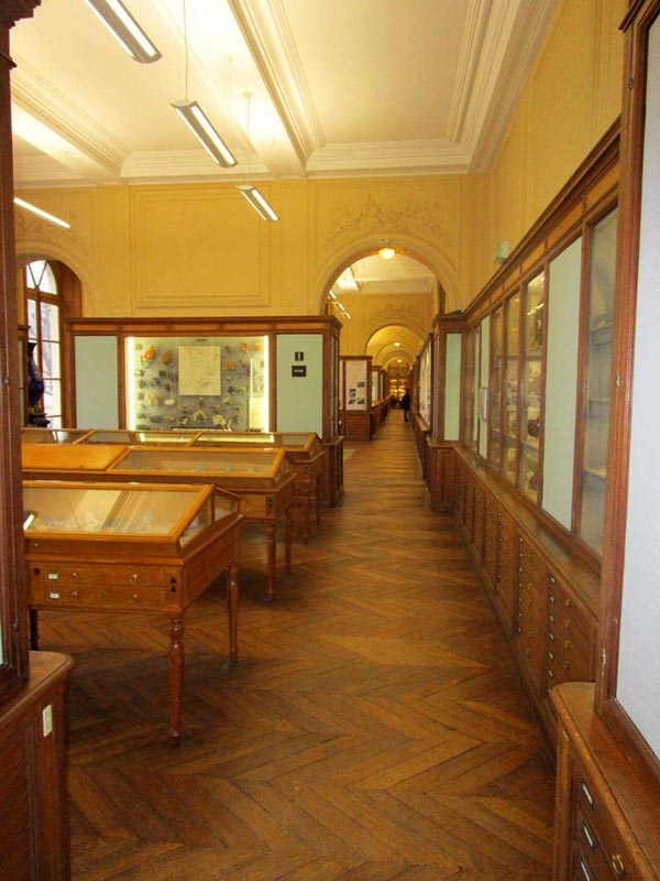 Collection of the Ecole de Mines / Mines ParisTech